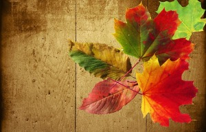 autumn-432294_640